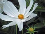 My First Flower Photo