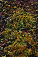 Texture_forest_foliage by iisjahstock