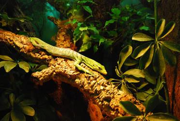 Lizard in the jungle by iisjahstock