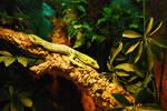Lizard in the jungle