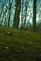 Forest floor by iisjahstock