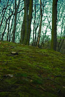 Forest floor by iisjahstock