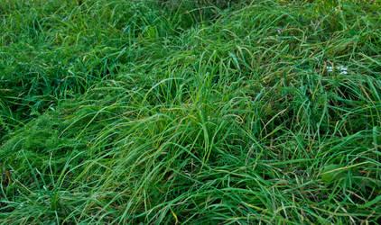 Grass by iisjahstock