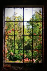 Window by basshound77