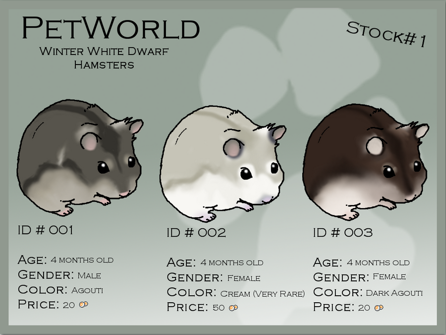 how to know the gender of hamster