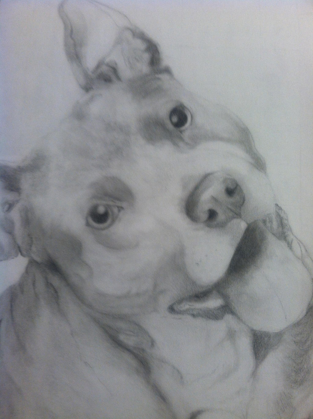 American Pit bull Terrier - Pencil Drawing WIP by xMush ...
