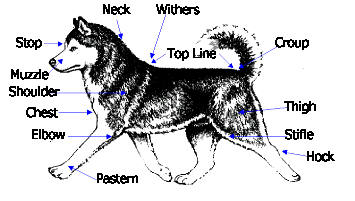 Fuel System Group 8 20 180 together with Ultimate Show Guide To Siberian Huskies 457657164 likewise Identification Group 12 24 1098 Ch18 750 furthermore R I P gravestone as well General Custer And Battle Of. on head command