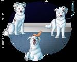TKC Puppy Training Program - Bunny