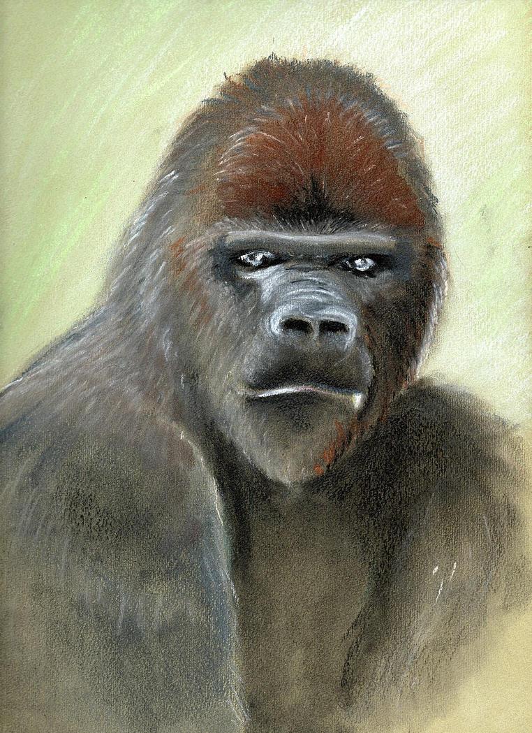 Gorilla by imcy
