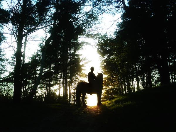 Sunset - Horse - new