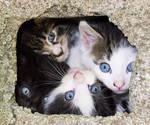 Box O Kittens by Gaspode5