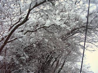 Winter VI by Bj83
