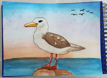 Seagull by XMLara