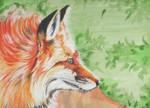 Red Fox by AlyWiish