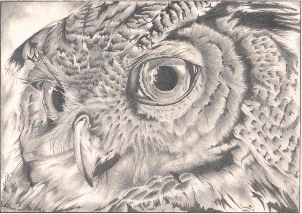 Eagle Owl Portrait by AlyWiish
