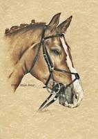 Horse's Portraits by AlyWiish