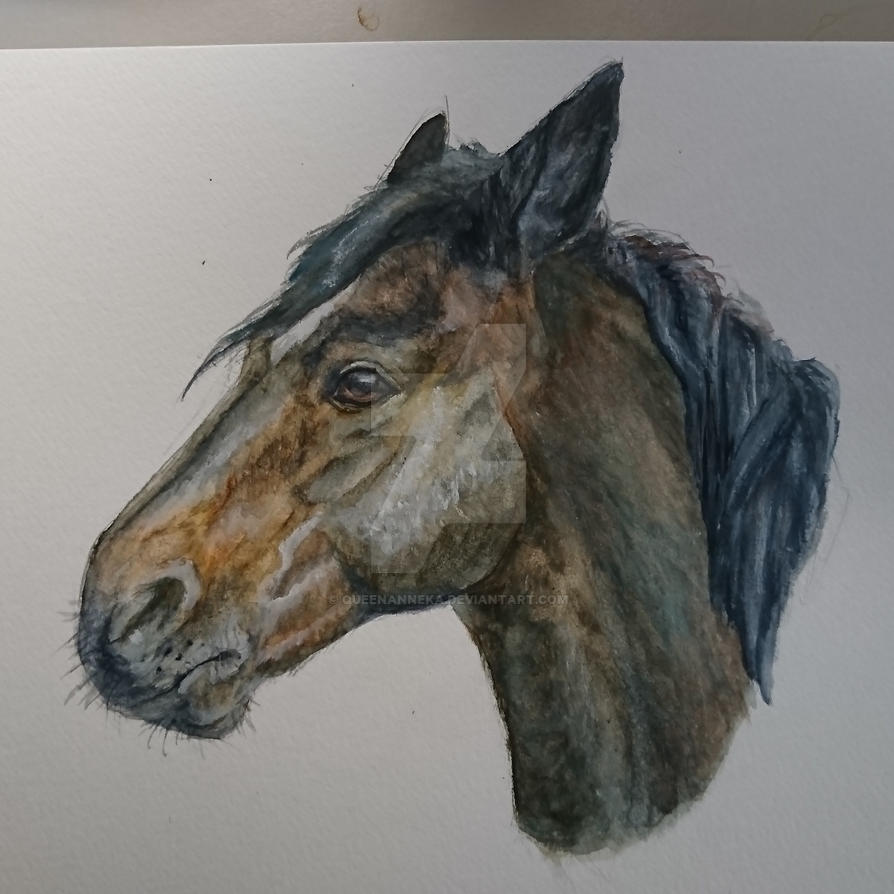 Quarter horse in hard watercolors by QueenAnneka