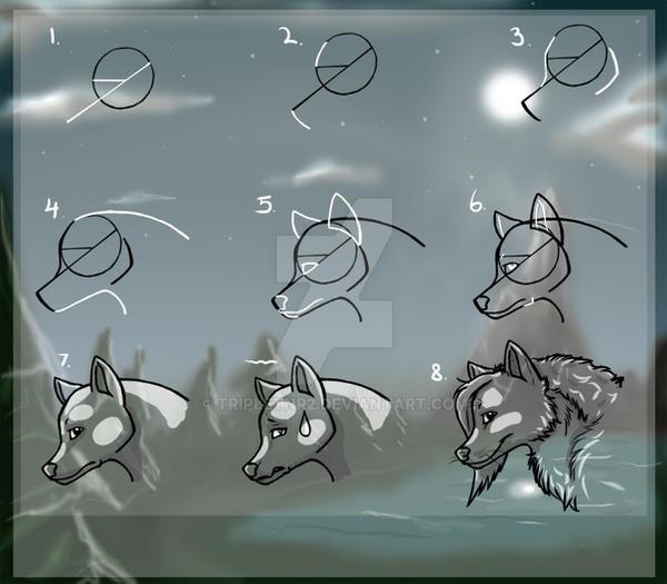 Wolf Tutorial -New version-