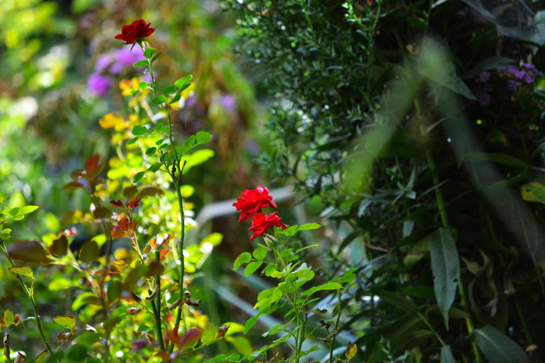 Grandma's garden by AlecsPS