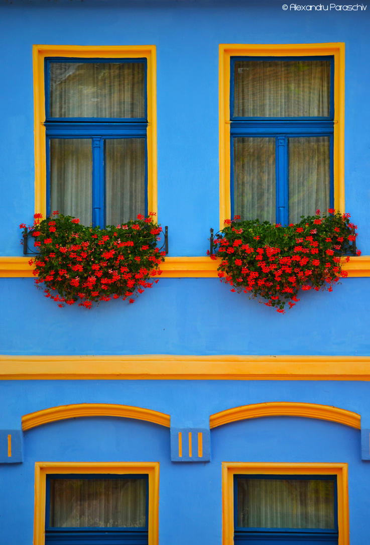 Windows by AlecsPS