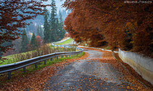 Autumnal perspective by AlecsPS