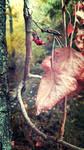Fall Awaits by XxParanoidAndroidxX