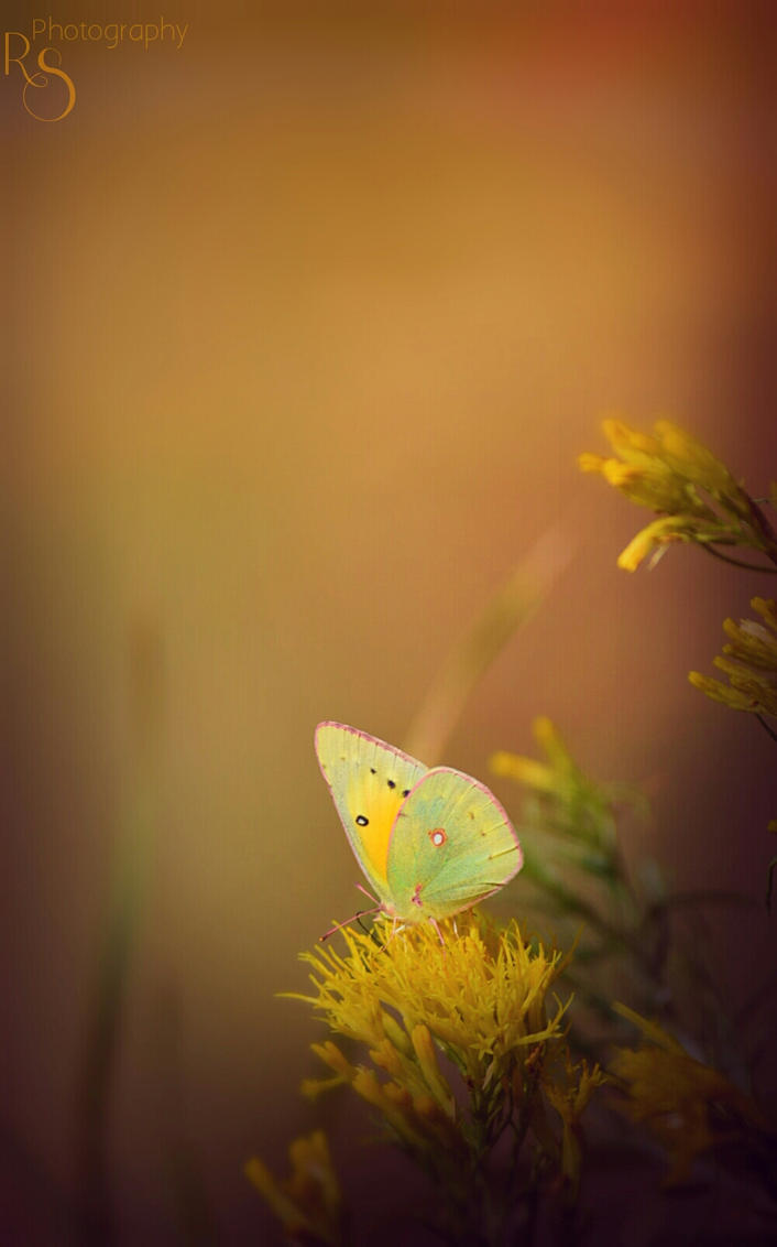 Whimsical Autumn by XxParanoidAndroidxX