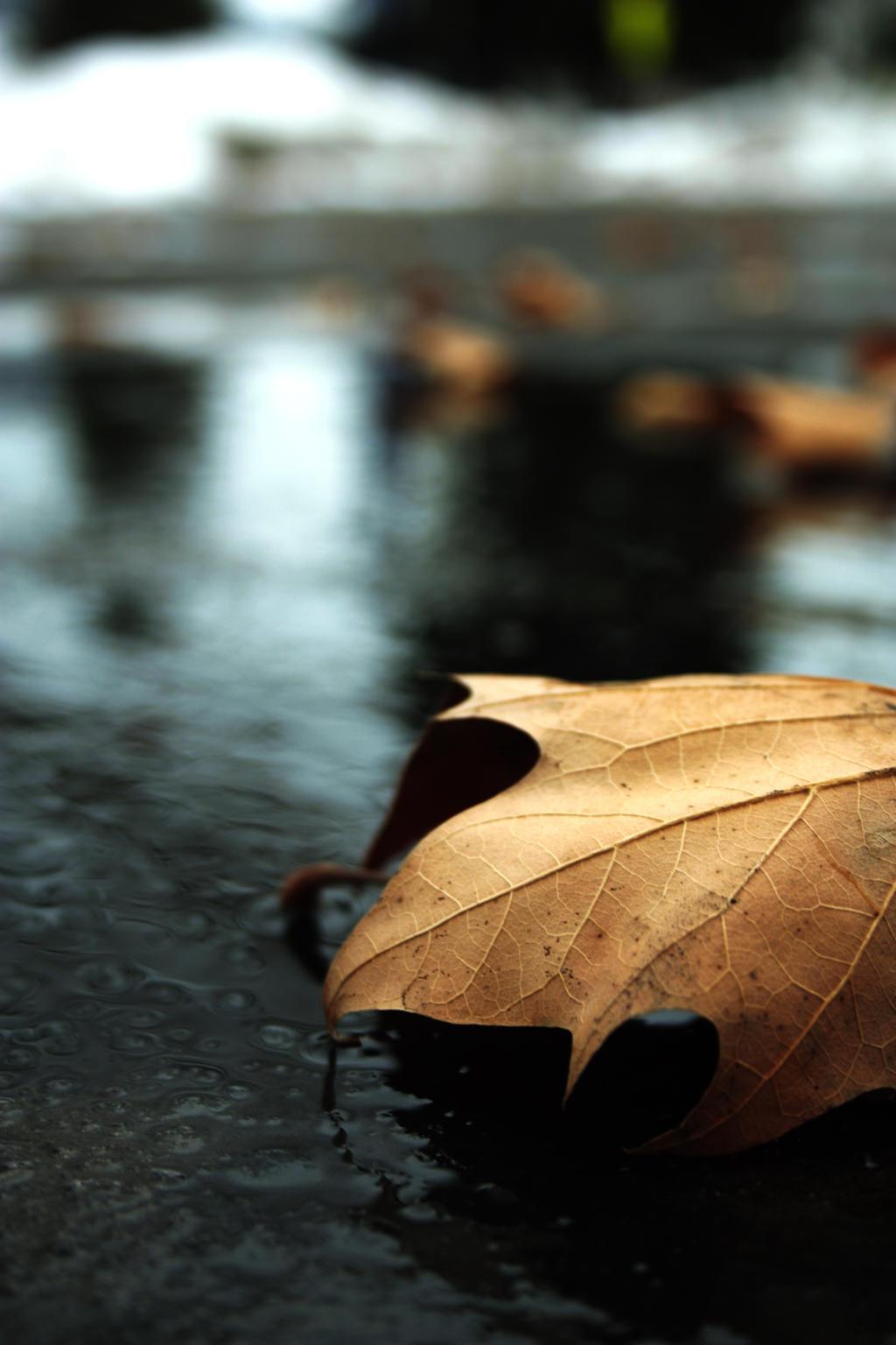 Autumn Leaf by Beckibracelet