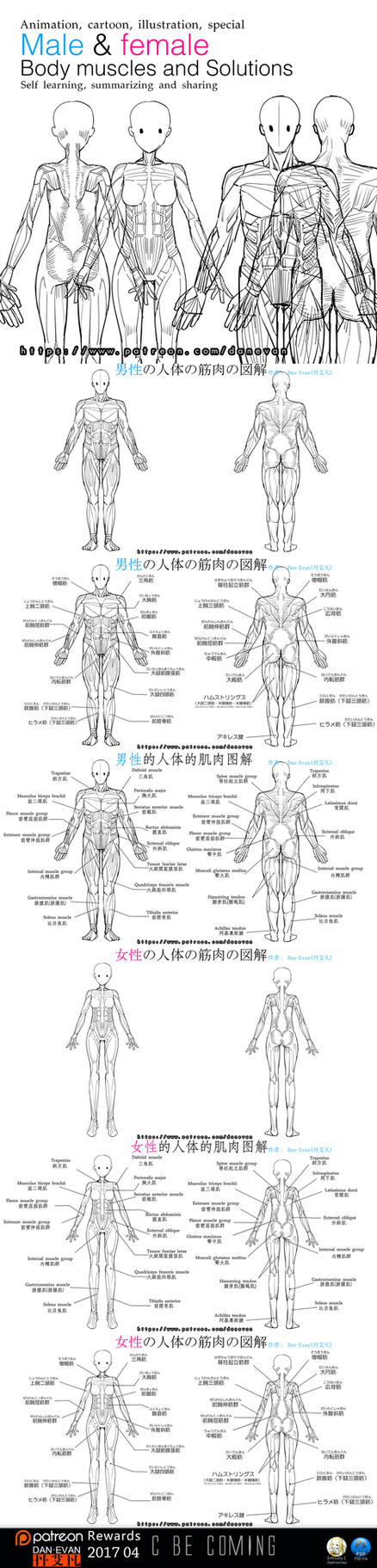 Male and female  Body muscles and Solutions by DanEvan-ArtWork