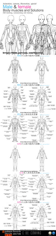 Male and female  Body muscles and Solutions
