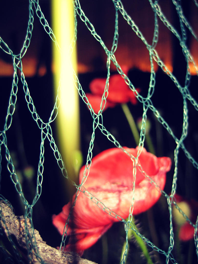 a prison of poppies by peach-apparatus