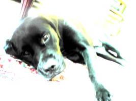 lileedog