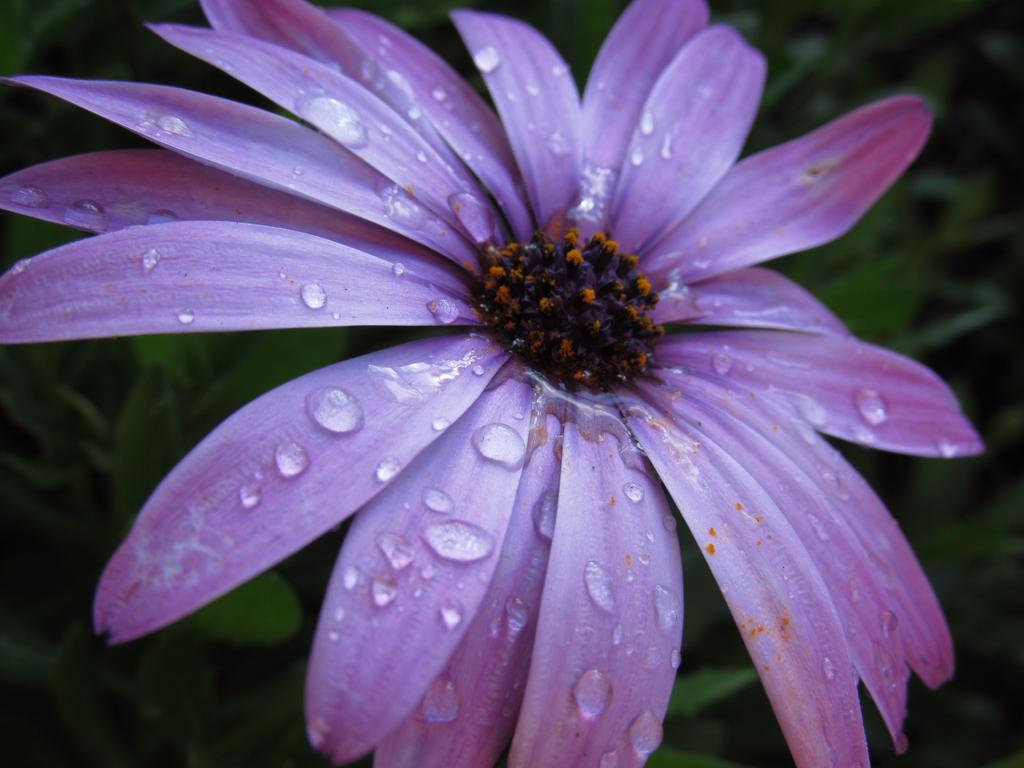 Rain drops by Gazing-at-the-Stars