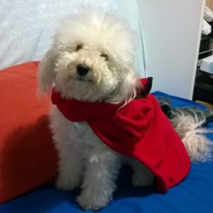 MikaLintu's Profile Picture