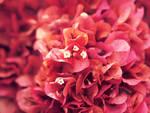 Cranberry Bliss