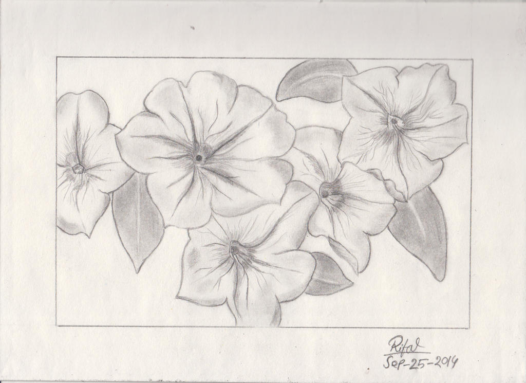 Traditional Flower Line Drawing : Just tried to draw petunia flower : by iloverifat on deviantart