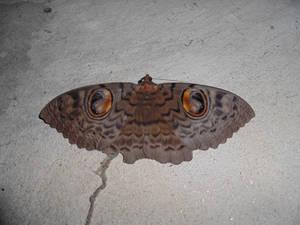 Monster Butterfly