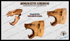 Mongolestes adrodens (Cranial reconstruction)