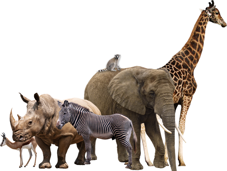 african safari animal collage by vesperius on deviantart free zebra print background clipart free zebra clipart borders