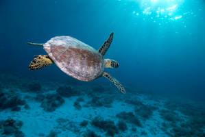 Turtle in the sun by DevilDiver