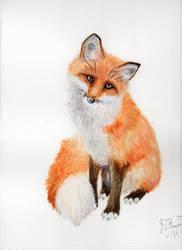 The Orange Beauty by PriscillaHavenaar