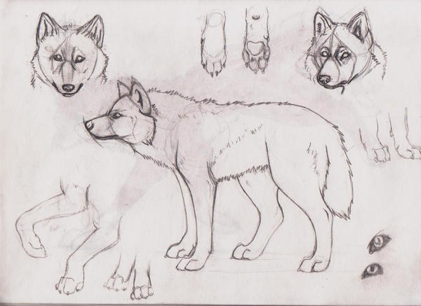 Wolf Study by AutonomousInk on DeviantArt