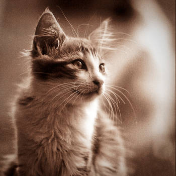 Kawai Kitty by Sblourg