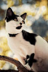 Automn cat by Sblourg