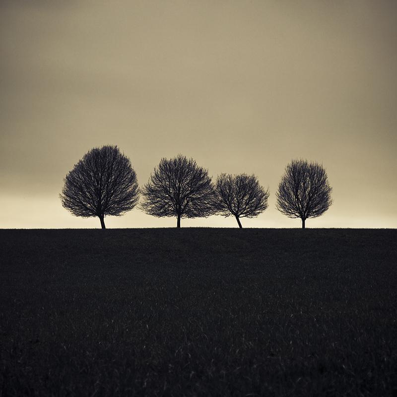 Tree II by Sblourg