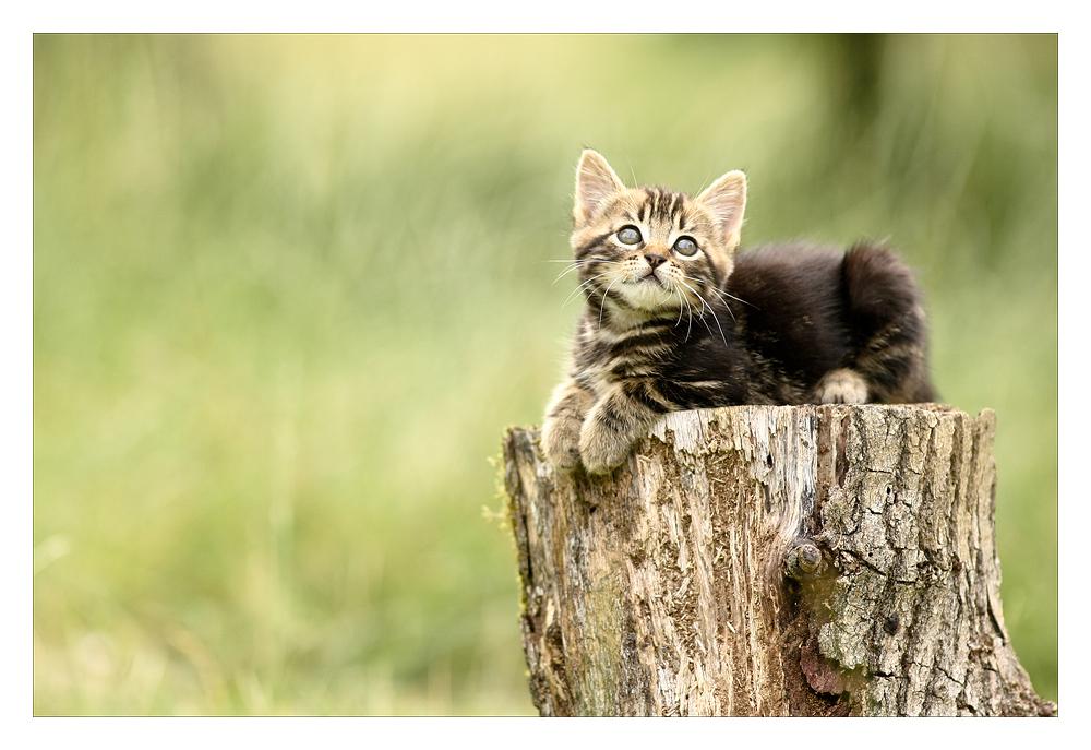 Le regard qui petille by Sblourg