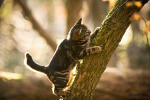 On a tree II by Sblourg