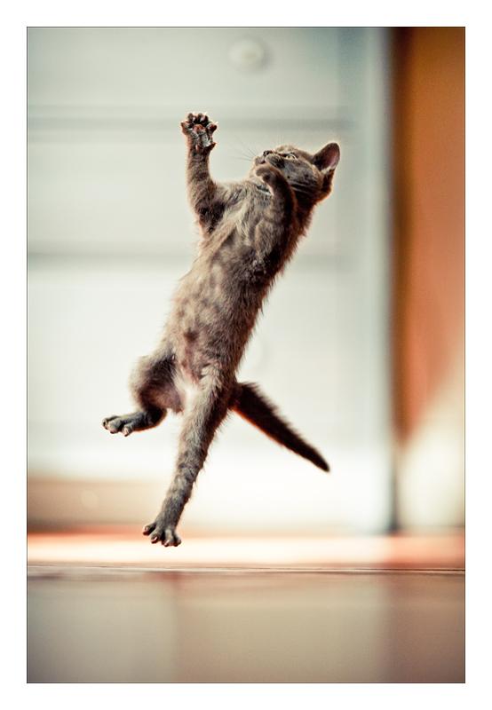 JP jump by Sblourg