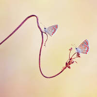Butterfly-173 by Sblourg