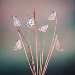 Butterfly-257